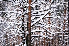Graphic winter landscape Stock Image