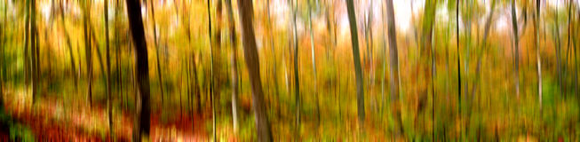 Graphical background-picture Indian summer. Autumn-ally forest in eastern Canada Stock Image
