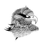 Graphical eagles head Stock Photos