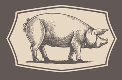 Graphical pig in frame Royalty Free Stock Images