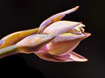 A graphical processed image of a flowering hosta Stock Photo