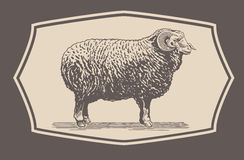 Graphical Ram, Sheep Stock Photos