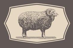 Graphical Ram, Sheep Stock Photos