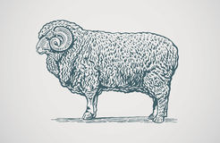 Graphical ram. Royalty Free Stock Images