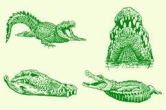 Graphical set of green crocodiles, vector illustration