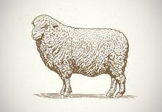 Graphical sheep. Stock Photos