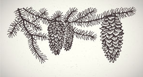 Graphical spruce branches. Stock Images