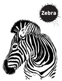 Graphical vintage set of zebras , sketch for design stock illustration