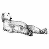 Graphically drawing a bear lying Stock Photography