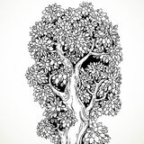 Graphically drawing black ink big old tree Royalty Free Stock Photography