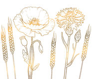 The graphics gold outline floristic flowers, poppy, cornflower, wheat Stock Photography