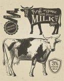Graphique de vintage de vache Image stock
