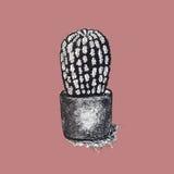 Graphiques noirs et blancs de cactus sur le fond pour des modèles Image stock