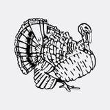 Graphiques tirés par la main de crayon, dinde Gravure, style de pochoir Photos libres de droits