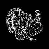Graphiques tirés par la main de crayon, dinde Gravure, style de pochoir Photographie stock libre de droits