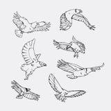 Graphiques tirés par la main de crayon Oiseaux d'ensemble de proie Photo stock