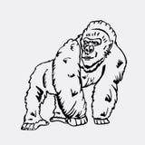 Graphiques tirés par la main de crayon, singe, gorille Gravure, style de pochoir Logo noir et blanc, signe, emblème, symbole esta Photographie stock