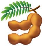 Graphisme de tamarinier illustration de vecteur