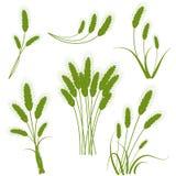 Graphismes de blé