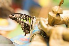Graphium Agamemnon. Bright Beautiful butterfly closeup Stock Photo