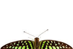 Graphium isolated Stock Images