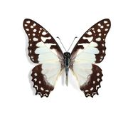 Graphium pylades Royalty Free Stock Photography