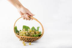 Grappe for harvest Royalty Free Stock Photos