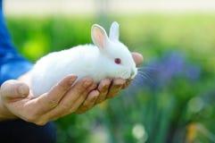 Grappig baby wit konijn in de handen van een mens royalty-vrije stock afbeelding