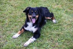 Grappig binnenlands hond dierlijk buitenpark royalty-vrije stock fotografie
