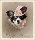 Grappig dresed chihuahua stock foto's