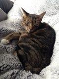 Grappig kattengezicht Royalty-vrije Stock Afbeeldingen