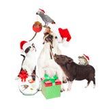 Grappig Kerstmishuisdier Compositie Stock Afbeelding