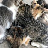 Grappig leuk gestreept shorthairkatje, mooie kattenzitting van sm royalty-vrije stock afbeelding