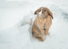 Grappig leuk konijn met blauwe ogen die zich in sneeuw bevinden Royalty-vrije Stock Foto