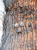 grappig ogen en mondplastiek op de oppervlakte van de boomschors Stock Afbeelding