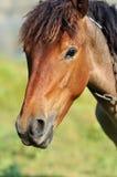 Grappig paard Royalty-vrije Stock Afbeeldingen