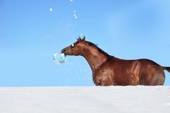 Grappig paard Stock Afbeeldingen