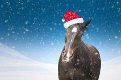 Grappig paard met Kerstmishoed bij de blauwe sneeuwval als achtergrond Stock Afbeeldingen