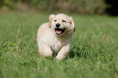 Grappig puppy Stock Foto's