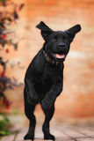 Grappig Puppy Royalty-vrije Stock Fotografie