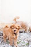 Grappig puppy op het zand Stock Foto