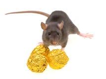 Grappig rat en chocoladesuikergoed dat op wit wordt geïsoleerds Royalty-vrije Stock Foto's