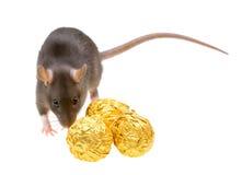 Grappig rat en chocoladesuikergoed dat op wit wordt geïsoleerdw Royalty-vrije Stock Fotografie