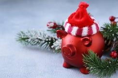 Grappig rood varken stock fotografie