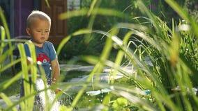 Grappig weinig jongen 1 5 jaar die hosing installaties in de tuin bestuderen stock video