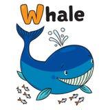 Grappig weinig walvis Alfabet W Royalty-vrije Stock Afbeeldingen