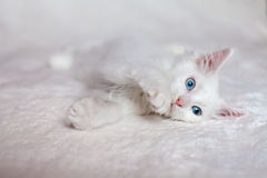 Grappig wit katje stock foto's