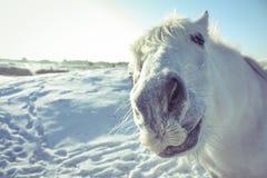 Grappig wit paard die de camera bekijken stock foto