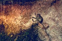 Grappige aap stock fotografie
