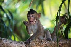 Grappige aapbaby op boom Royalty-vrije Stock Afbeeldingen